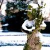 Dwalen door een magische winterwondertuin
