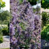 'Buytengewoon' mooie tuin
