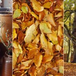Fall Inspiration 1 Copyright © Brosisprod