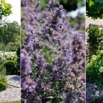 buytengewoon mooie tuin © Brosisprod